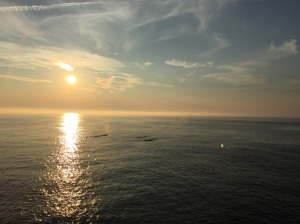 Perfect evening for whale watching